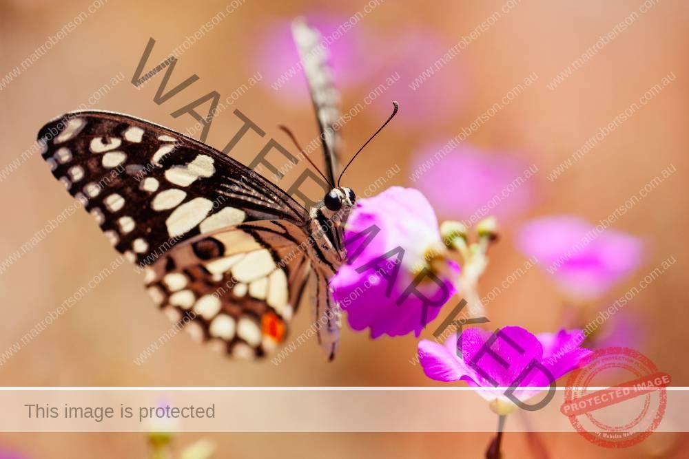 butterflyin